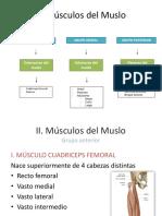 Musculo de Muslo- Pierna-pie