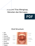 Anatomi menelan