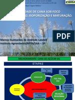 3 Landell Stab Florescimento Isop 2013