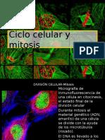 Ciclo celular y mitosis I.pptx