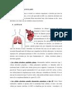 Conductos Alveolares Sacos Alveolares
