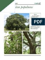 Brachychiton_populneus-web.pdf