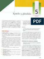Cap 5- Epitelio y glandulas.pdf
