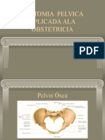 Dr Moya Anatomia Pelvica