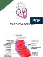 PB2 - Cardiovascular 2016
