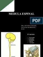 Anatomia de Medula