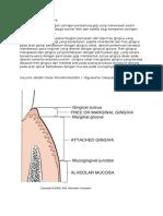 Struktur anatomi gingiva