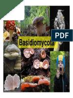 HONGOS - Basidiomycota