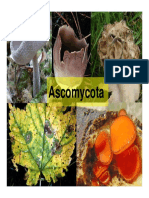 HONGOS - Ascomycota