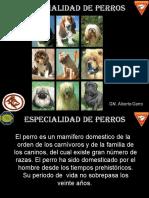 Especialidad Perros