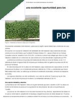 El Chile Habanero_ Una Excelente Oportunidad Para Los Productores