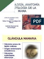 anatomiadelamama2010-130120202711-phpapp01