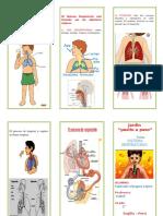 Sistema Respiratorios triptico