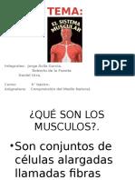 El sistema musculatorio 6° basico