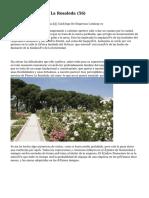 Article   Floristería La Rosaleda (56)