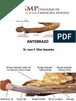 ANTEBRAZO (3)