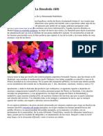 Article   Floristería La Rosaleda (60)