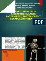 Cátedra de Anatomía Humana-clase Hombro