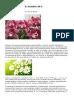 Article   Floristería La Rosaleda (63)