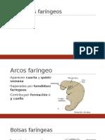 Faringe y Sus Derivados