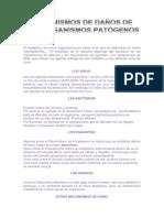 1.8_mecanismos de Daños de Los Organismos Patogenos_bichos