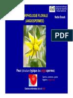 TD S2 Morphologie Florale 2013 -14