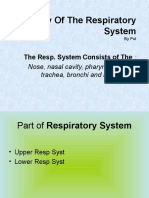 Anatomi of the Respiratory System