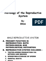 K4 - Histology of the Reproductive System