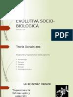 D. EVOLUCIONISTA.pptx