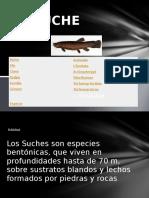 EL SUCHE