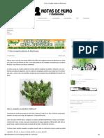 Cómo Revegetar Plantas de Marihuana