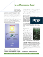 refining-and-processing-sugar.pdf