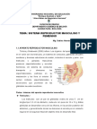 Sistema Reproductor Masculino y Femenino 23