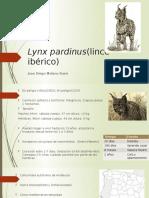 Estado de Poblaciones de lynx pardinus