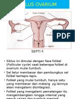 siklus ovarium