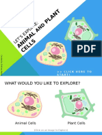 Let's Explore:Animal and Plant Cells