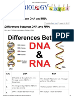 Differences Between DNA and RNA