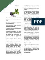 Bancos Vivos de Semillas y Biopreparados (Patagonia)