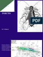 Anatomia Interna