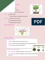 Características Das Plantas