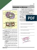 19-Estudando a célula.pdf