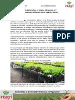 07. Produccion de Hortalizas en Hidroponia
