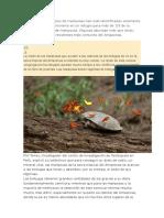 Informacion Mariposas