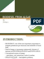 Biodiesel From Algae(FINAL)