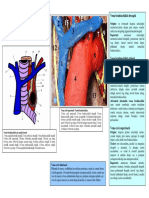 LP18 VENELE CAVE SISTEMUL VENELOR AZYGOS CANAL TORACIC NERVUL VAG NERVUL FRENIC.pdf