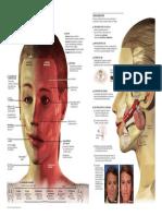 2013 Paralisis Facial Copyright