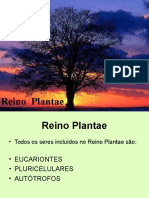 reinoplantae 2.ppt
