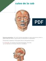 2. Musculos de la cabeza.ppt