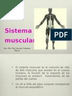1. Sistema Muscular