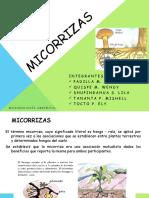 Micorrizas Diapositivas (2)